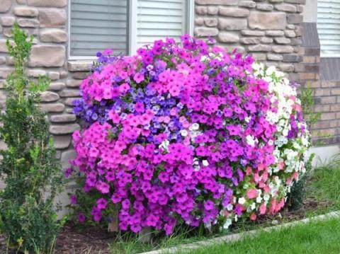 Каскадная цветущая клумба из петуний - отличное решение для украшения сада!