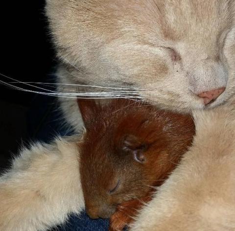 У маленького бельчонка, брошенного мамой, теперь есть семья