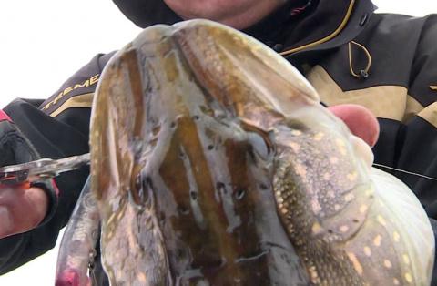 Рыбаки Пензенской области выловили Огромного Пресноводного МОНСТРА!