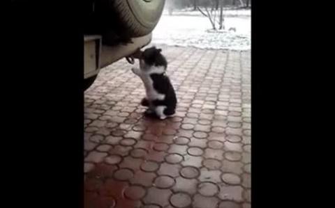 Кот и выхлопная труба авто