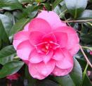 Цветочный гороскоп кельтов: сентябрь, октябрь, ноябрь