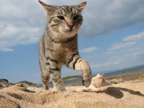 Кошачий пляж в Италии покори…