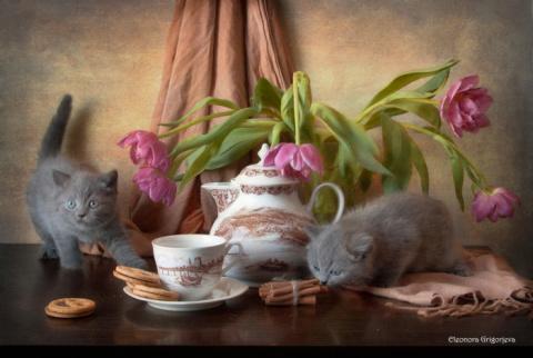 НатюрКотики, или «кошки-мышк…