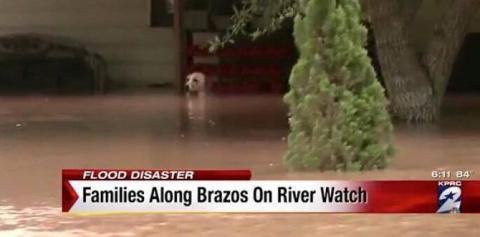 Эта собака барахталась в вод…