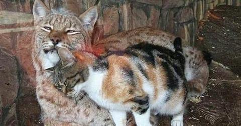Все мы нуждаемся в общении. Бездомная кошка искала еду, а получила необычного друга
