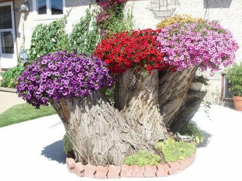 Клумбы из пней и бревен – нетривиальное украшение вашего сада