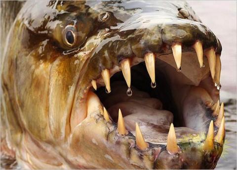 Самая опасная Рыба в Мире!!! Не верю своим глазам...