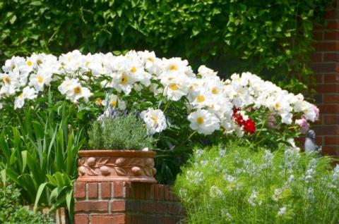 Белые растения для любого сезона