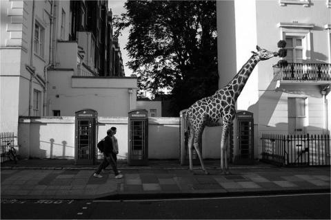 Животные в городе: проект Ce…