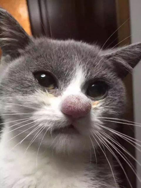 Бедные котики нарвались на пчел))