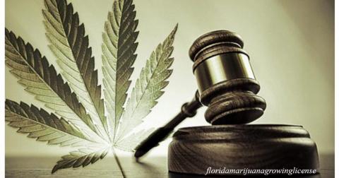 Врач рассказал, почему нельзя легализовать марихуану