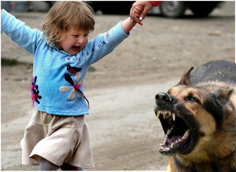 Пес погрыз ребенка. Кто виноват?