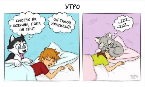 КОШКИН ДОМ. 10 комиксов о том, как отличается жизнь с кошкой от жизни с собакой