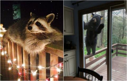Нежданный гость: 25 забавных фото, на которых запечатлены неожиданные встречи человека и животных