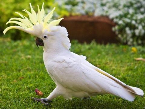 Этот попугай знает как поднять настроение