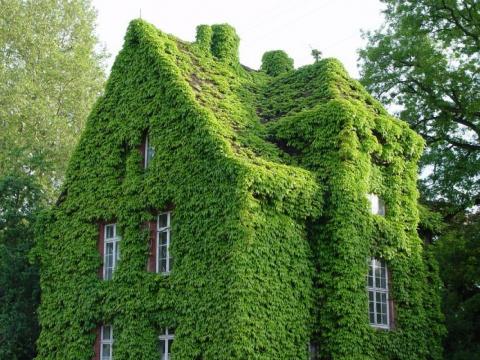 Великолепные зеленые стены: …