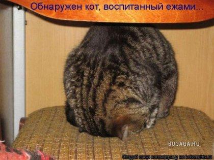 Отдохни с котоматрицей