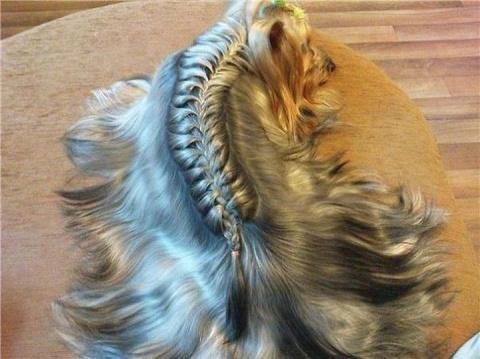 10 чудесных животных, украшенных косами