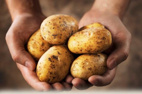 6 основных ошибок при выращивании картофеля