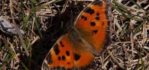 Эффект бабочки: как насекомы…