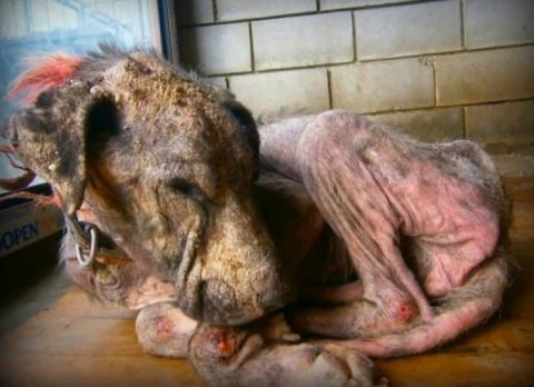 Эта страдающая собака хотела…