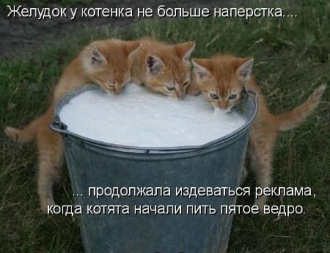 большая котоАхота1 ©кот