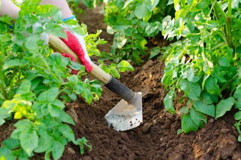 Земляное укрытие. Стоит ли окучивать все растения подряд?