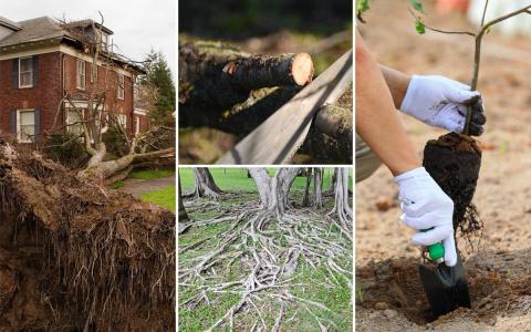 Посадка деревьев и кустов – правила безопасности