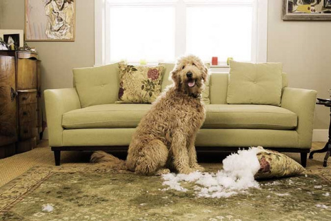 Один дома: Поспать или диван подрать?