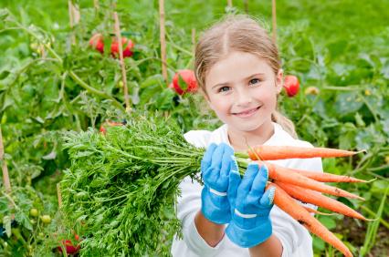Правильные удобрения моркови