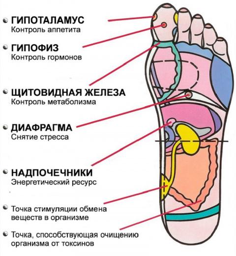 Рефлексология стопы: эти 7 а…
