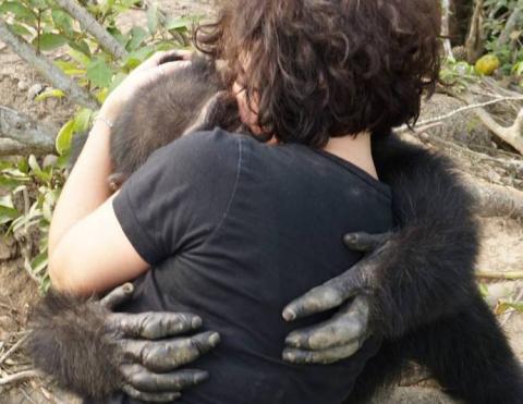 Выживший: история шимпанзе Понсо, брошенного на верную смерть!