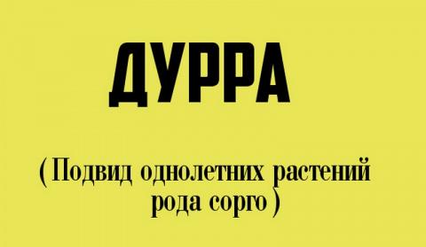 12 странных слов, которые и правда есть в русском языке