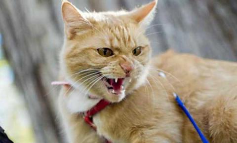 В Японии кошка подозревается…