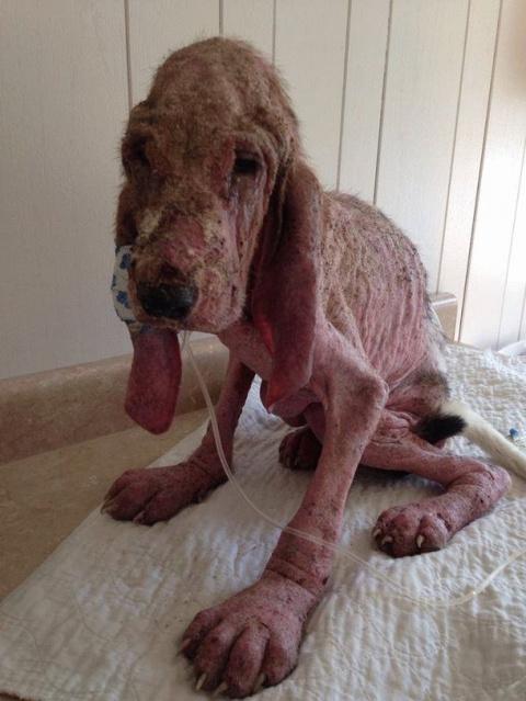 Умирающего пса нашли одного в лесу. На последних фото его просто не узнать!