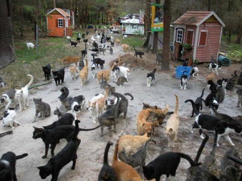 Лесной рай для кошек