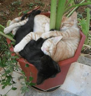 Пришла весна — расцвели коты…