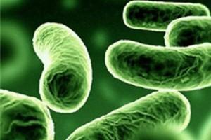 Уникальная бактерия станет н…