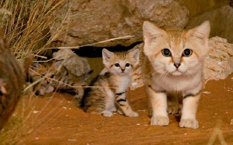 17 Необычных кошек, о существовании которых знают не все
