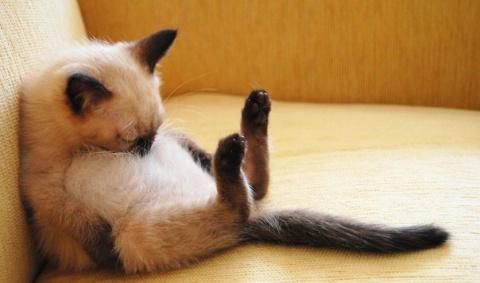 Хвостик - на подушке, на простынке - ушки!