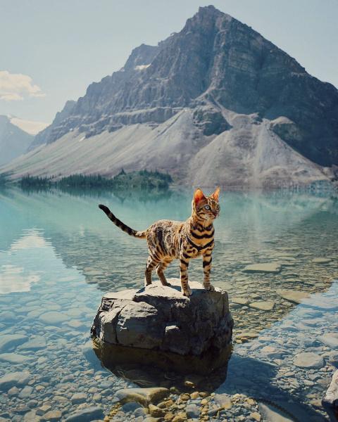 Кошка-путешественница покори…