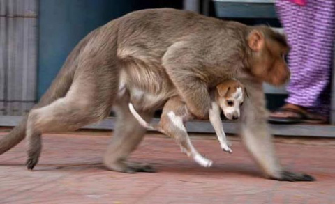 История об обезьяне, которая стала мамой для щенка
