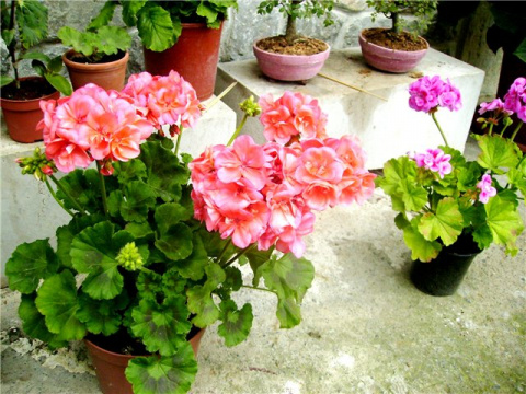 Стимулируем цветение комнатн…
