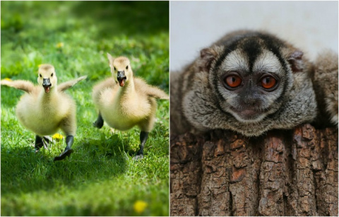 Звериная детвора: 23 фотографии очаровательных детенышей животных