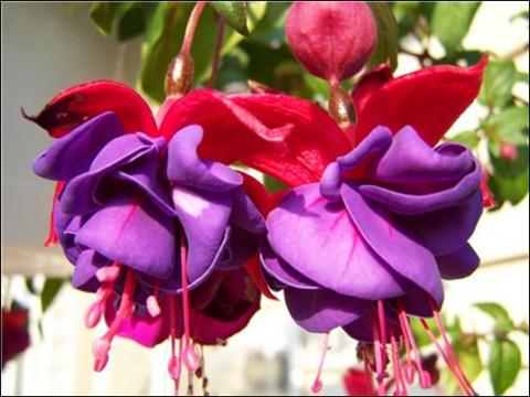 Растения-талисманы