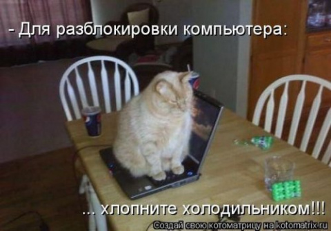 Предпраздничная котоматрица