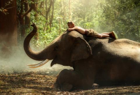 Всемирный день слонов: самые…