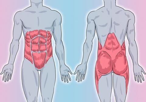 Укрепляем мышечный корсет: 5…