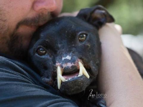 Khalessi - щенок питбуля, у которого нет половины морды, но который до сих пор любит людей