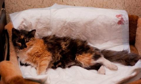 История про кошку, которой п…